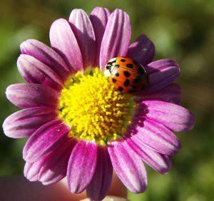 Les fleurs pour votre santé